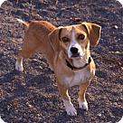 Adopt A Pet :: Comet