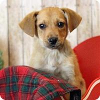 Adopt A Pet :: Caleb - Waldorf, MD