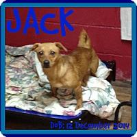 Adopt A Pet :: JACK - New Brunswick, NB