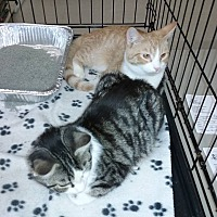 Adopt A Pet :: Franklin - Powell, OH