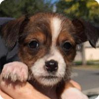 Adopt A Pet :: Carrie#2F - Orlando, FL