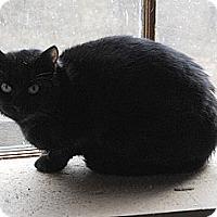 Adopt A Pet :: Onyx - N. Berwick, ME
