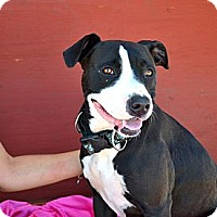 Adopt A Pet :: Day-Day- Courtesy Post - Phoenix, AZ