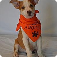 Adopt A Pet :: Rover - Aurora, CO