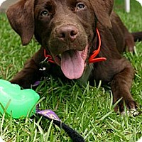 Adopt A Pet :: Reed - Baton Rouge, LA