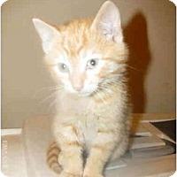 Adopt A Pet :: Kitten B - Xenia, OH
