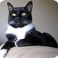 Adopt A Pet :: Peeps - Alexandria, VA