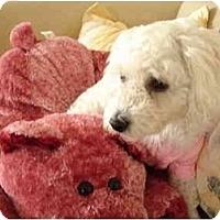 Adopt A Pet :: Tasha - La Costa, CA