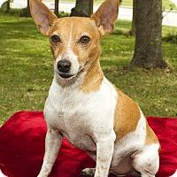 Adopt A Pet :: KIBBLES N - Alvin, TX