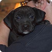 Adopt A Pet :: KENNEDY - MINNETONKA, MN