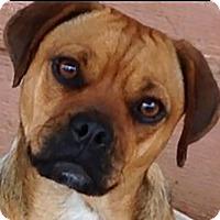 Adopt A Pet :: Jasmine - Carefree Little Girl - Allentown, PA