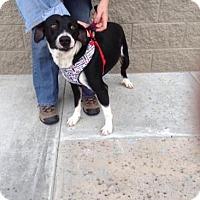 Adopt A Pet :: Nicholas - Wauchula, FL