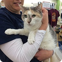 Adopt A Pet :: Sandy Sunshine - Fairfax, VA