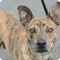 Adopt A Pet :: Scramble - Salt Lake City, UT