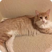 Adopt A Pet :: Colby - Mesa, AZ
