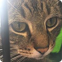 Adopt A Pet :: Calvin-PetValu Voorhees - Voorhees, NJ