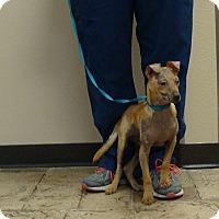 Adopt A Pet :: Taco - Oviedo, FL