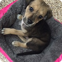 Adopt A Pet :: Moby - Thousand Oaks, CA