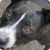 Adopt A Pet :: Maggie (LS) - Santa Ana, CA