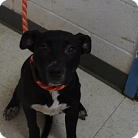 Adopt A Pet :: Rosie (Lonely Heart) - Gulfport, MS