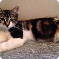Adopt A Pet :: Aubrey - River Edge, NJ