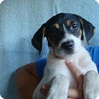 Adopt A Pet :: Saber - Oviedo, FL