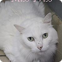 Adopt A Pet :: Miss Priss - Bradenton, FL