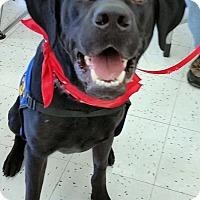 Adopt A Pet :: Cash - Coppell, TX