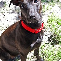 Adopt A Pet :: Wynonna Judd - Bradenton, FL