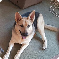German Shepherd Dog Dog for adoption in Greensboro, North Carolina - Harley (CL)
