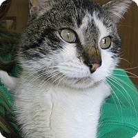 Adopt A Pet :: Parker - Menomonie, WI