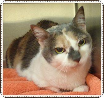 Domestic Shorthair Cat for adoption in Marietta, Georgia - CHARLIE