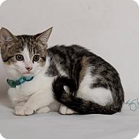 Adopt A Pet :: Leroy - Riverside, CA