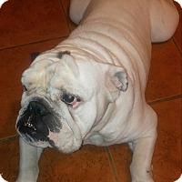 Adopt A Pet :: Tonka - Santa Ana, CA