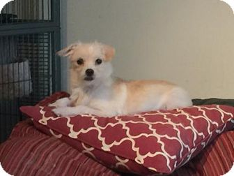 Terrier (Unknown Type, Medium) Mix Dog for adoption in Parker Ford, Pennsylvania - Sailor