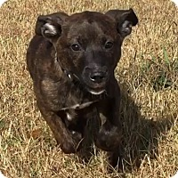 Adopt A Pet :: Butler - Natchitoches, LA