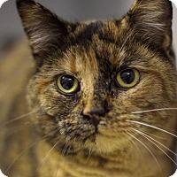 Adopt A Pet :: Lola - Cody, WY