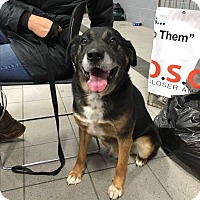 Adopt A Pet :: Rover - Sparta, NJ