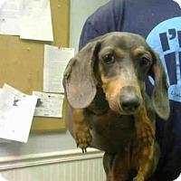 Adopt A Pet :: SWEET TART - Atlanta, GA