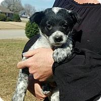 Adopt A Pet :: Sarah Gray~adopted! - Glastonbury, CT