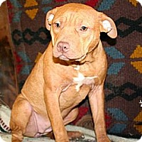Adopt A Pet :: Cinder - Chesapeake, VA