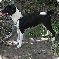 Adopt A Pet :: Blacky - Fort Valley, GA