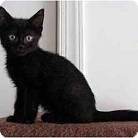 Adopt A Pet :: Opie - Richmond, VA