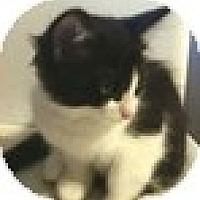Adopt A Pet :: Harley - Vancouver, BC