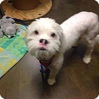 Adopt A Pet :: Wilson - Higley, AZ