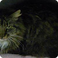 Adopt A Pet :: Jolie - Springdale, AR