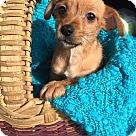 Adopt A Pet :: Dewey