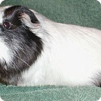 Adopt A Pet :: Dio - Steger, IL