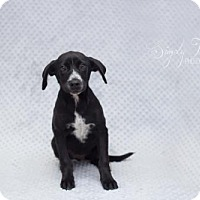 Adopt A Pet :: Roy - Valley Falls, KS