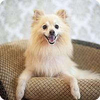 Adopt A Pet :: Aiden - Dallas, TX